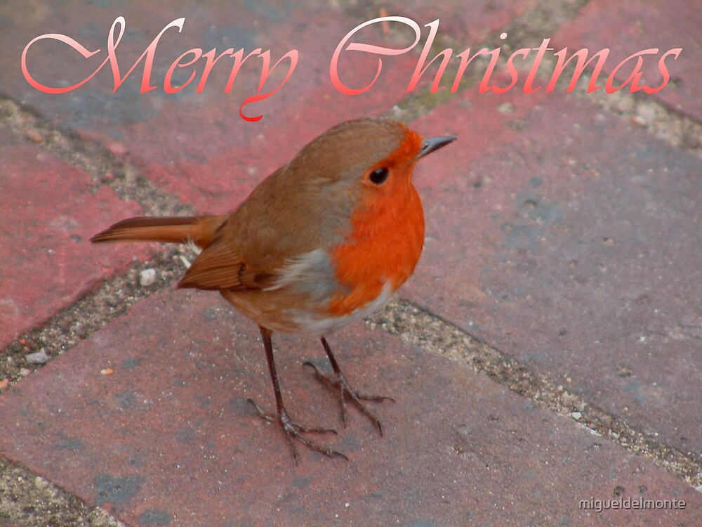 Robin Merry Christmas by migueldelmonte