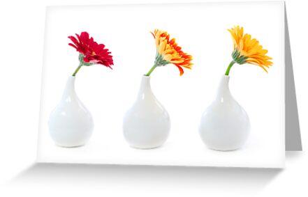 Three vases  by Elena Elisseeva