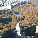 Aerial View, Autumn Colors, Central Park, New York City  by lenspiro