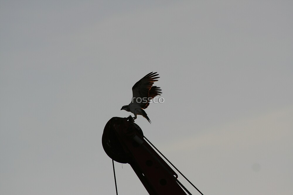 Bird On The Crane by rossco