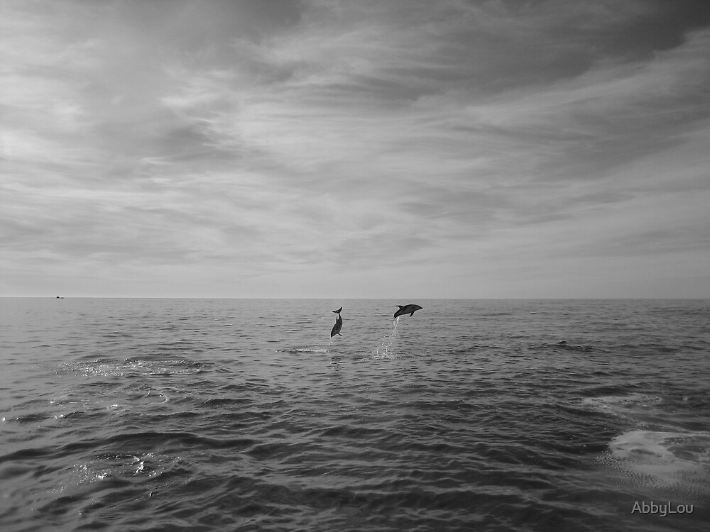 Dolphins Play by AbbyLou