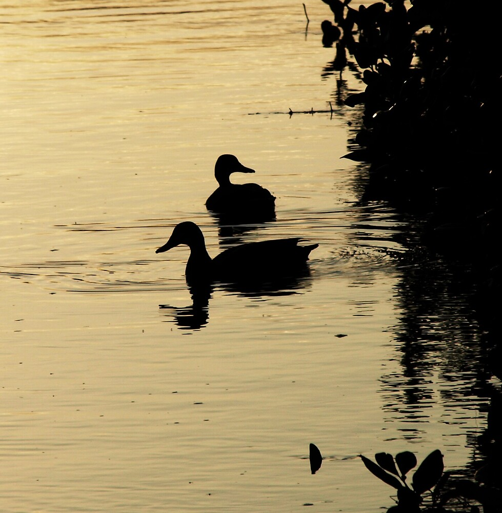 Shadow ducks by Kate456