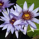 Flower Close-Up, Bronx, New York City by lenspiro