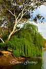 Murray River by Darren Stones