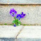 Violets by Silvia Ganora