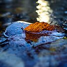 Yellow Leaf in a Brook by Nazareth