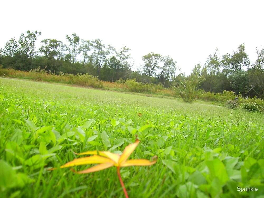 Blurred leaf by Sprinkle