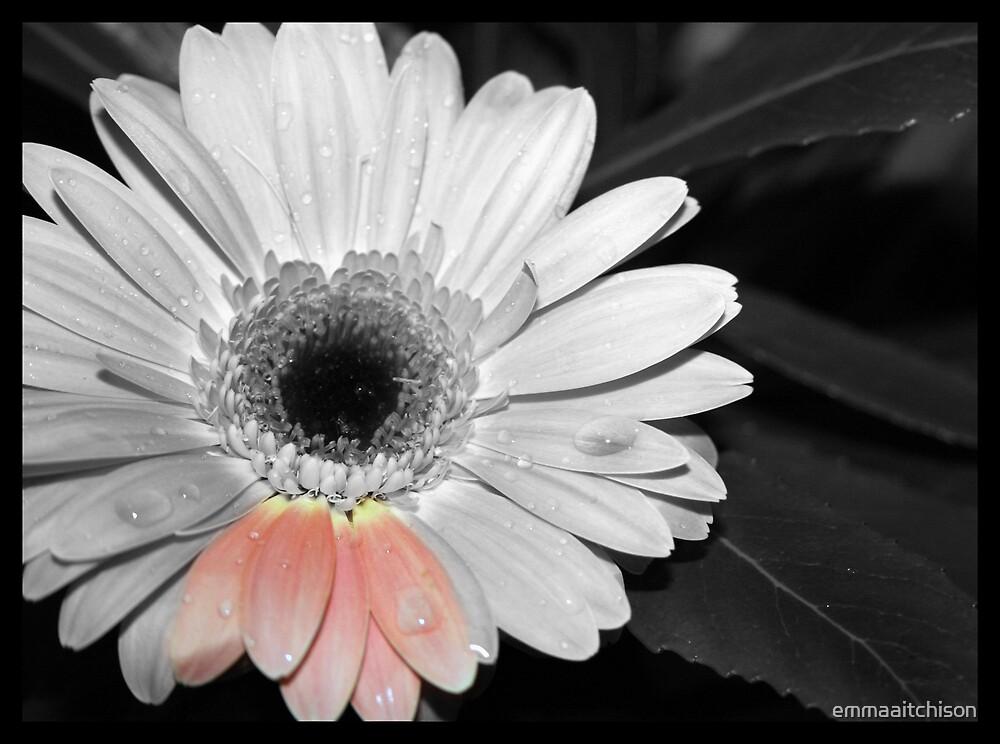 Flower by emmaaitchison