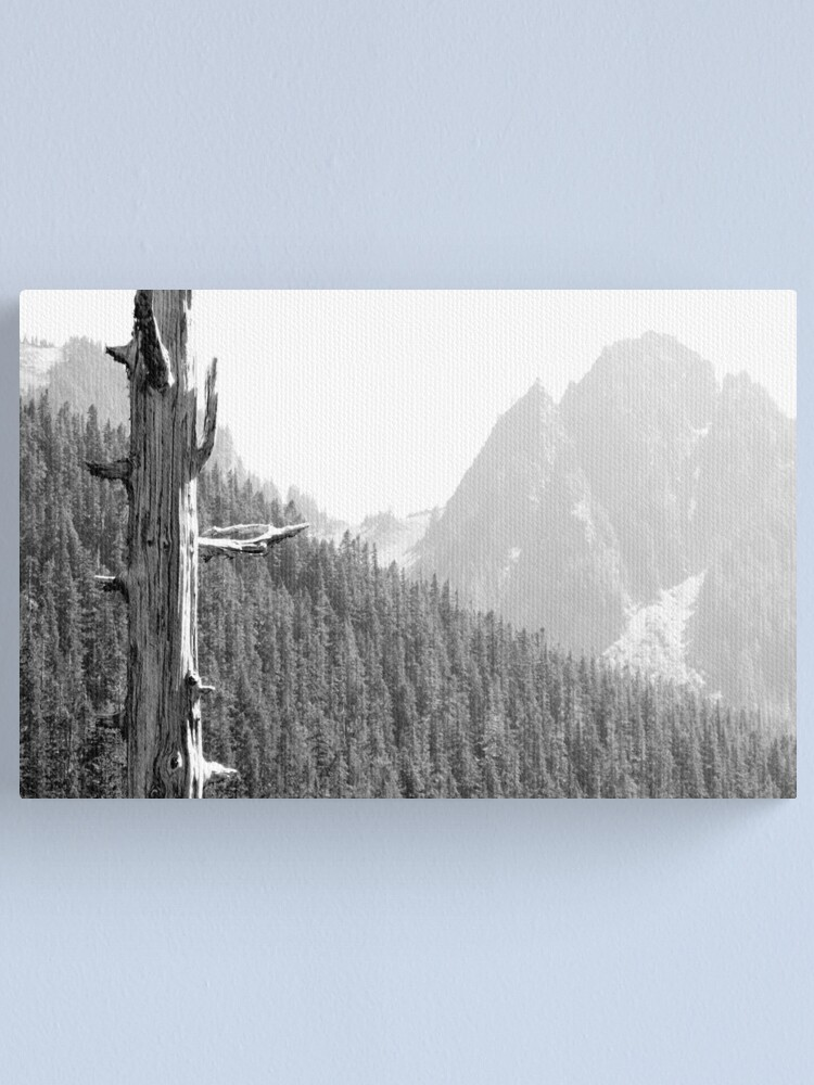 Alternate view of Lonesome Pine Canvas Print