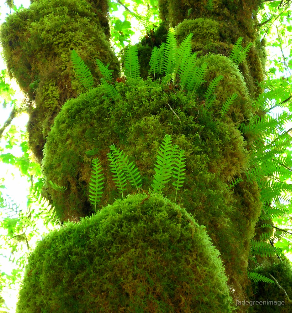 Fuzzy Ferns by jadegreenimage