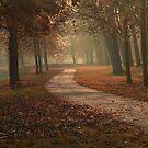 Autumn mist by Johanna26
