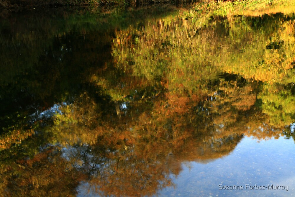 colours of Autumn by Suzanne Forbes-Murray