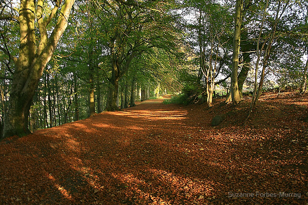 Autumn Floorcovering by Suzanne Forbes-Murray