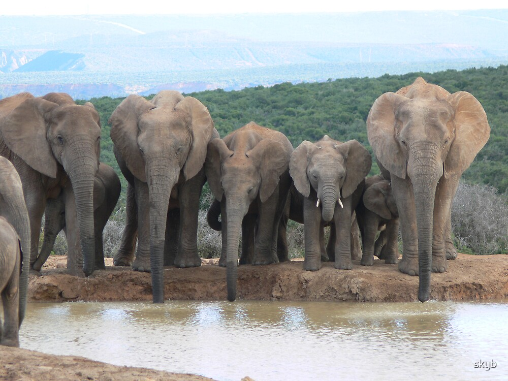5 elephants...... all in a line...... by skyb