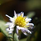 flowery light by budrfli