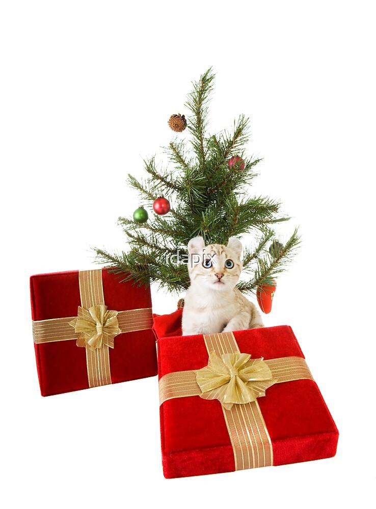 Christmas Kitten by idapix