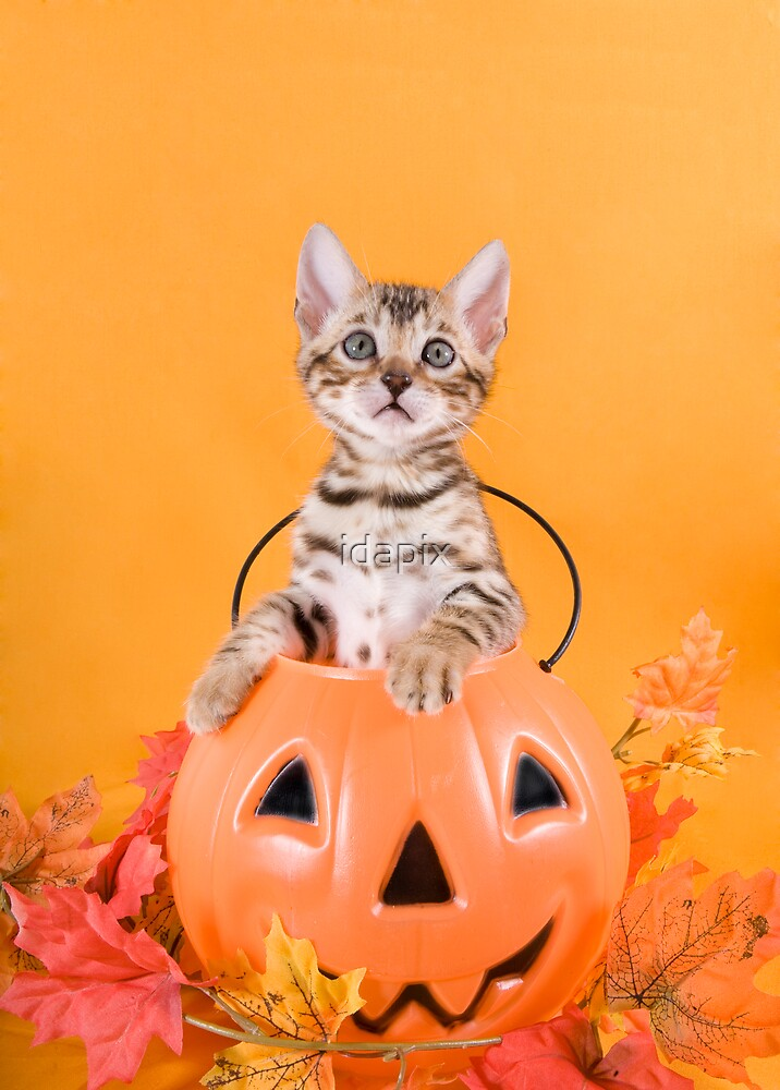 Halloween Kitten by idapix
