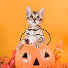 Halloween Kitten by idapix