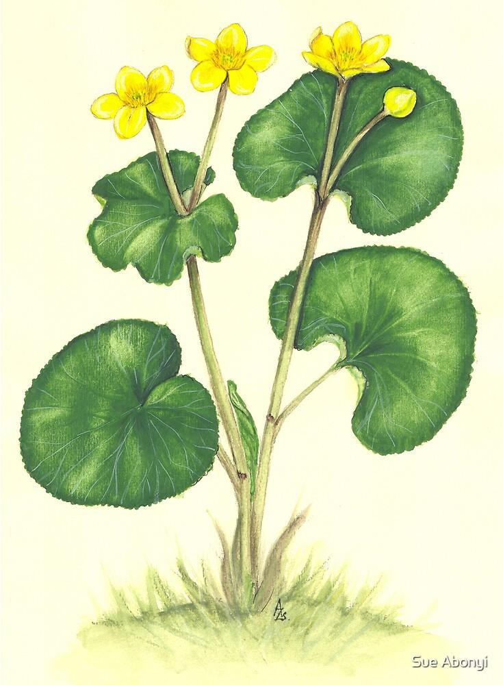 Kingcup - Caltha palustris by Sue Abonyi