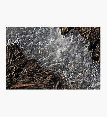 Winter Ice on Grass Photographic Print