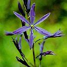 purple flowers one by yuccamayapapaya