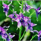 purple flowers number two by yuccamayapapaya