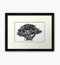 Tree of Summer, Ink Drawing Framed Print