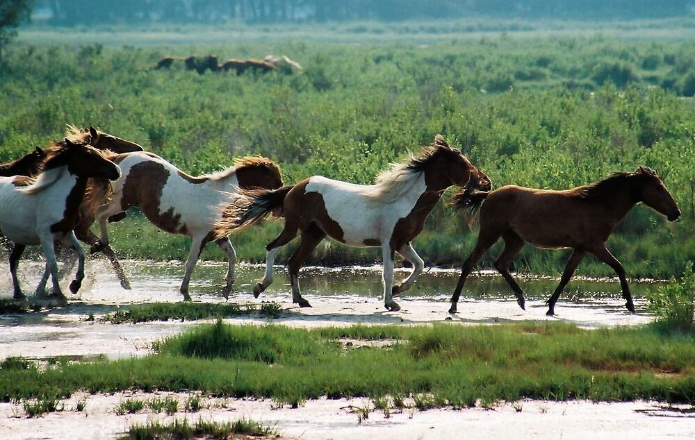 Ponies at Chincoteague Island,Va by Teri1963