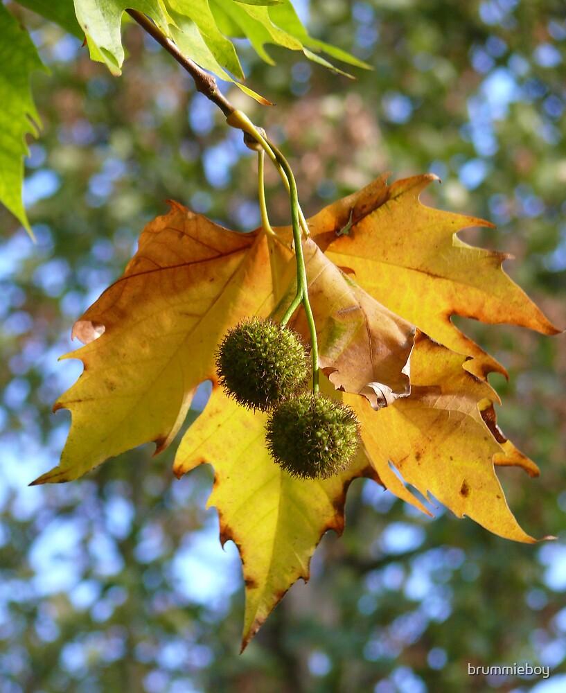 Autumn in England by brummieboy