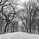 Snowfall on Poets Walk by Randy  LeMoine