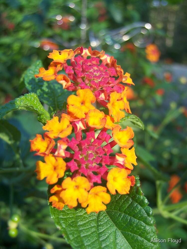 Yellow Flowers by Allison Floyd