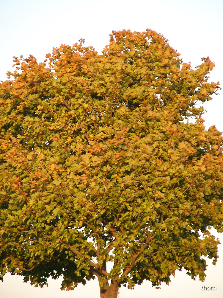 Full Leaves by thorn
