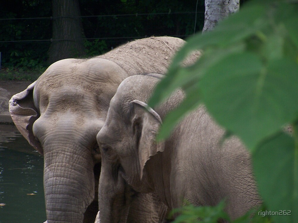 elephant....elephant by righton262