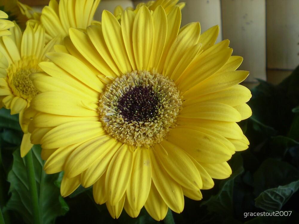 Yellow Daisy by gracestout2007