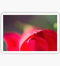 Elegant Macro of a Red Rose Sticker