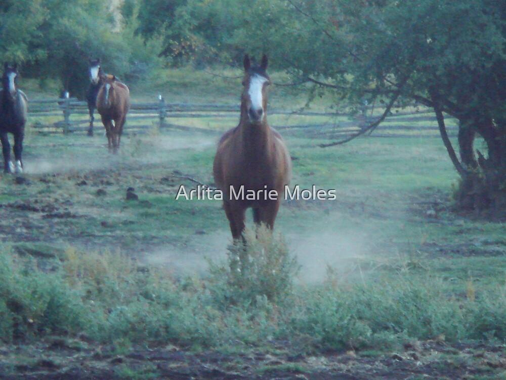 Stirring Dust by Arlita Marie Moles