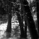 snowy Oregon forest 8 by Dawna Morton