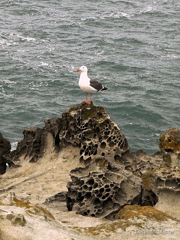 Seagull on Rock by Derek McMaster