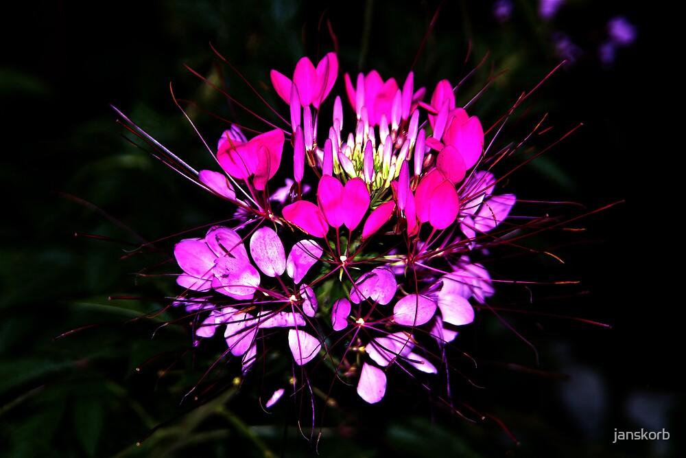 Flower  by janskorb
