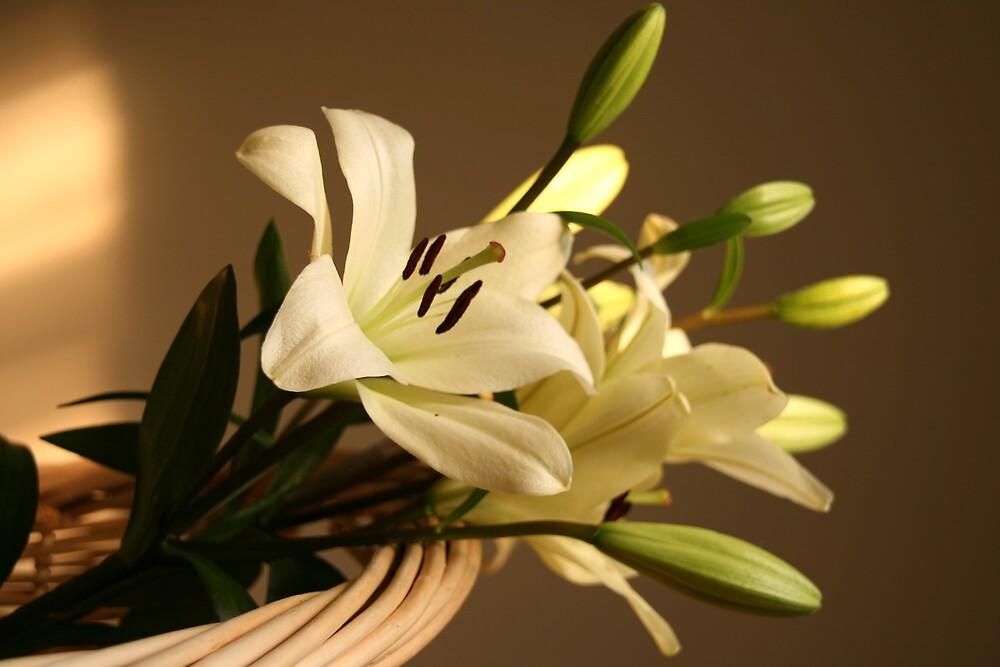 Delicate Flower by Nicmutt