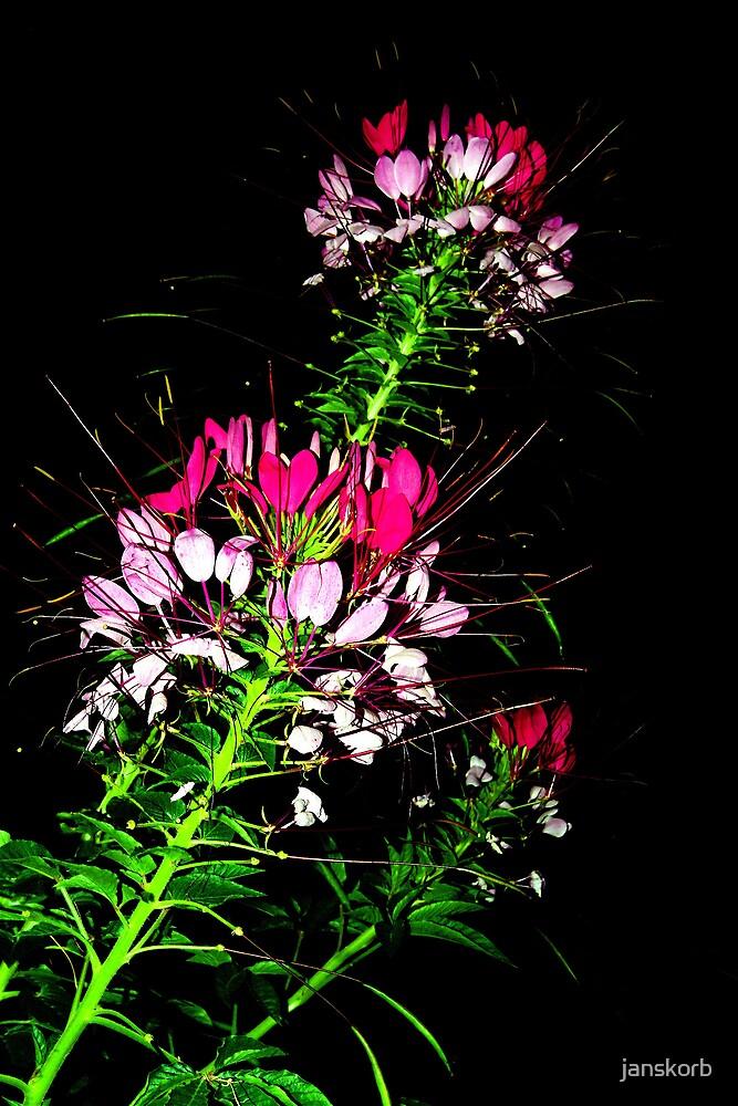 Flower  in the night by janskorb
