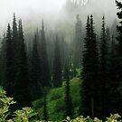 Sub-alpine pasture,  Mt Rainier National Park, Washington State by John Gaffen