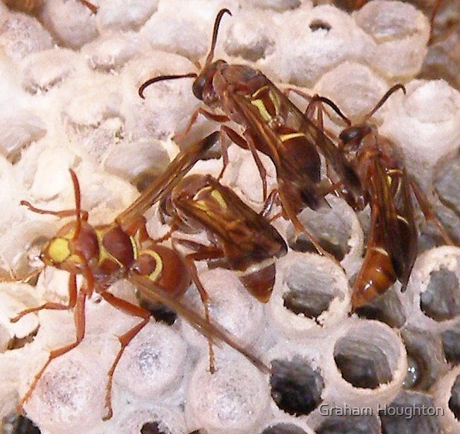 Wasps on the Burrup by Graham Houghton