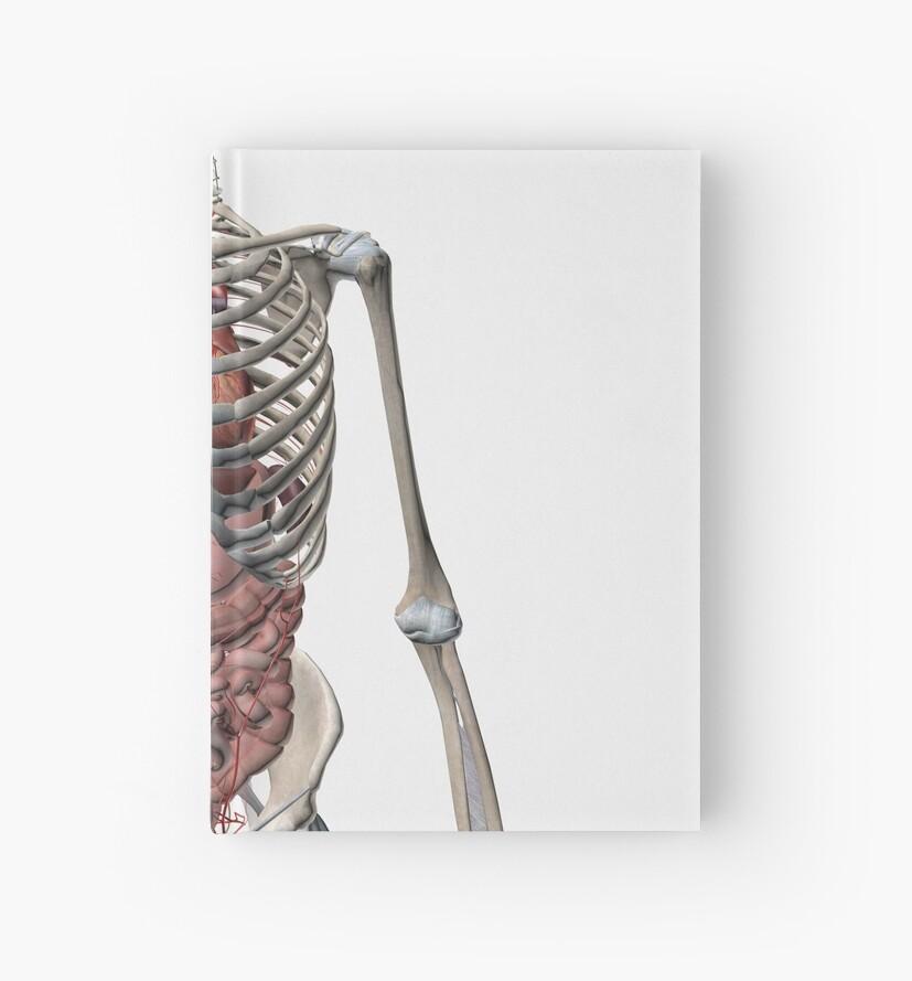 Cuadernos de tapa dura «Sistema esquelético humano con órganos del ...