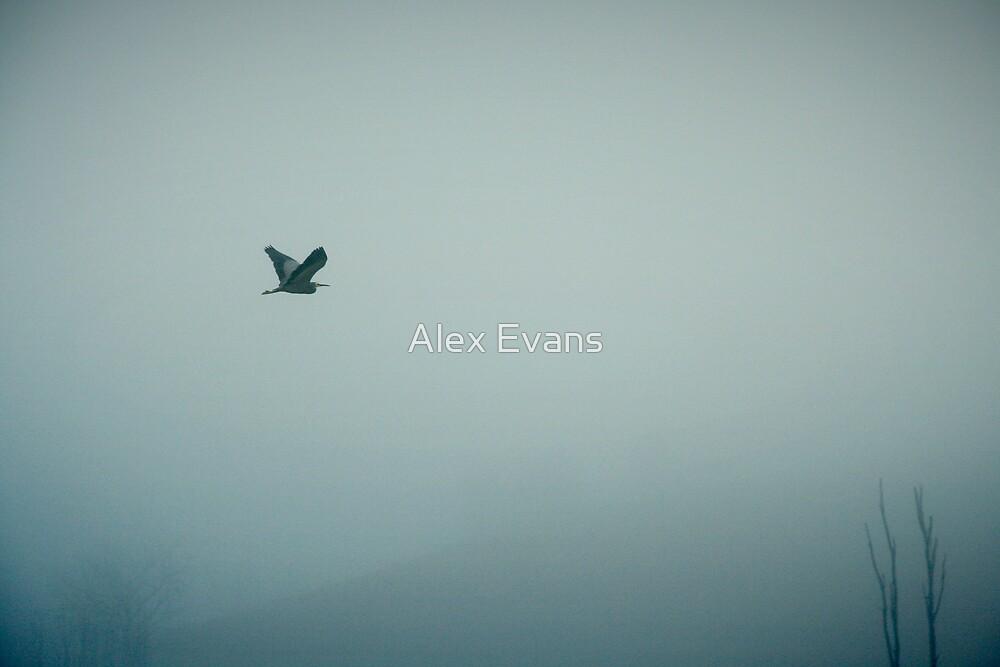 Herron in the Fog by Alex Evans