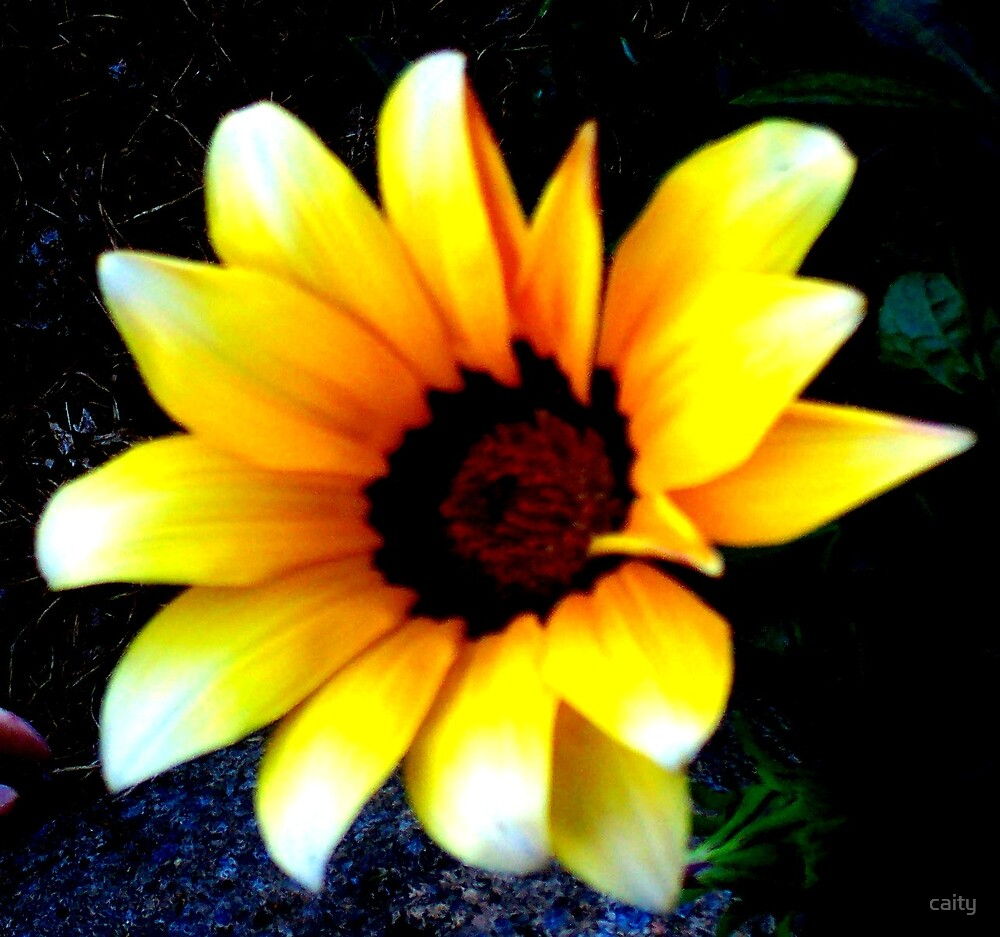 yellow flower by caity