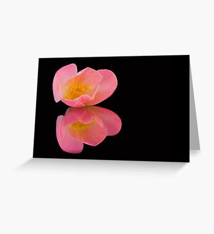 Dreamy Camelia Greeting Card