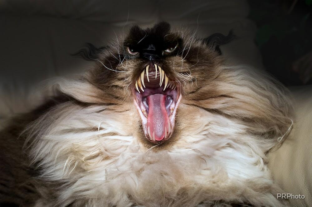 weird animal by PRPhoto