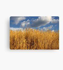 Golden Autumn Grass Canvas Print