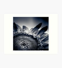 Moody Sunflower  Art Print